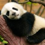 So finden Sie einen erholsamen und ruhigen Schlaf.