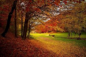 Hurra, hurra, der Herbst ist da. Darum ist der Herbst eine ganz besondere Jahreszeit. 10