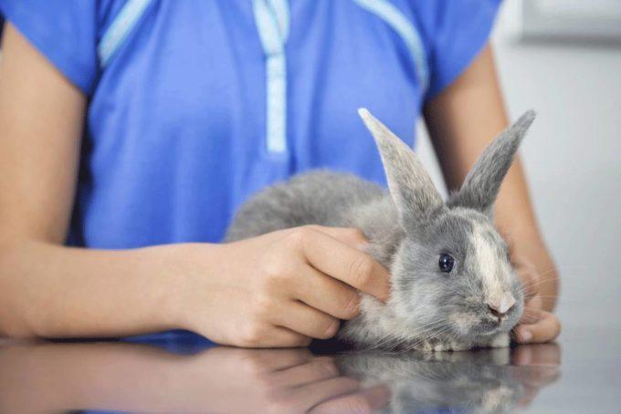 Ist es schlimm, wenn Kaninchen Pappe fressen?