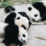 Chinesische Provinz Sichuan ein Lonely Planet Best of Asia 2020