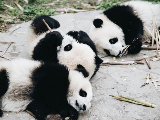 Chinesische Provinz Sichuan ein Lonely Planet Best of Asia 2018