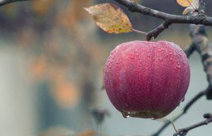 7 wunderbare Möglichkeiten Apfelessig zu verwenden. (Teil 1) 17