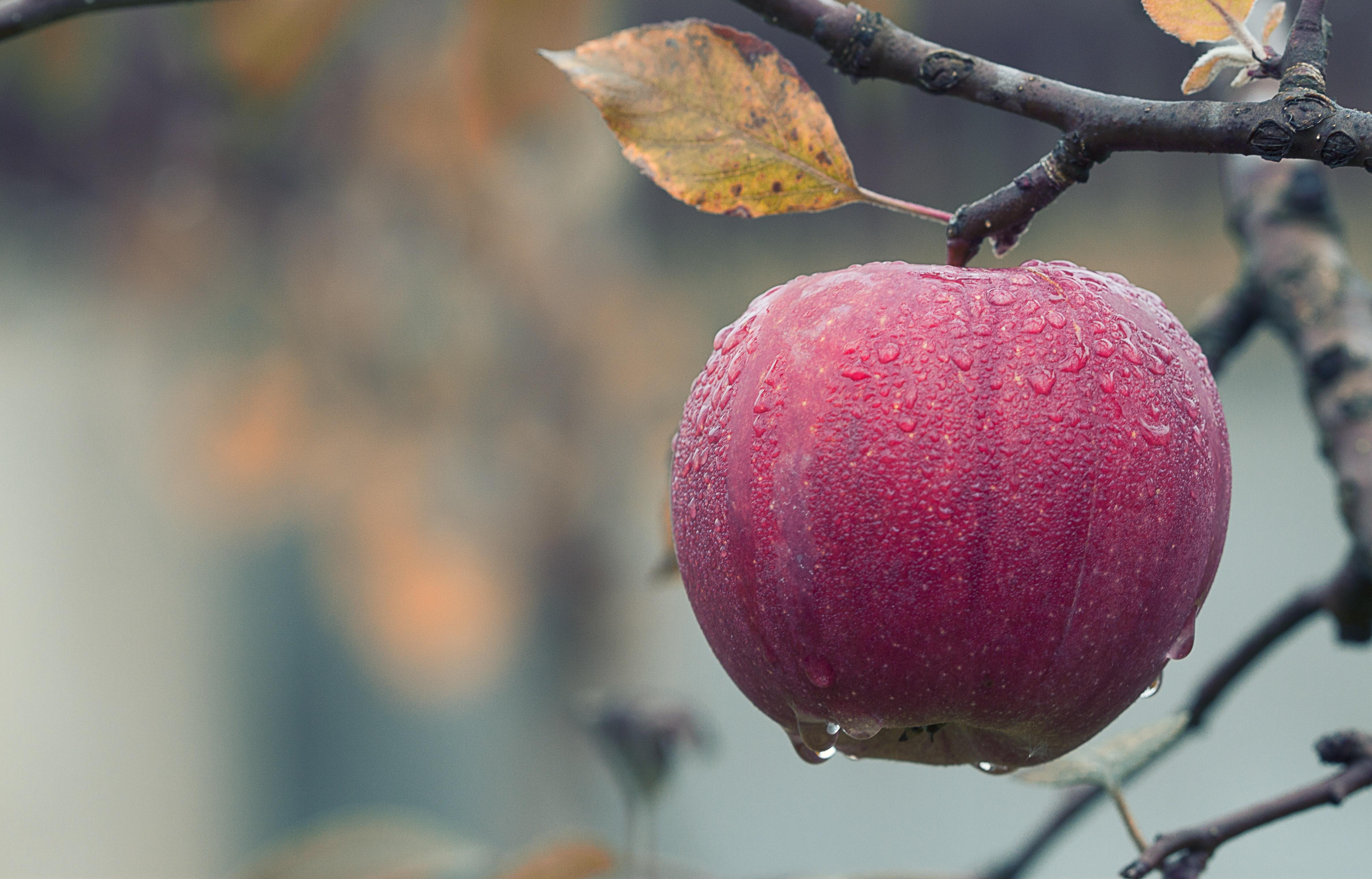 7 wunderbare Möglichkeiten Apfelessig zu verwenden. (Teil 2)