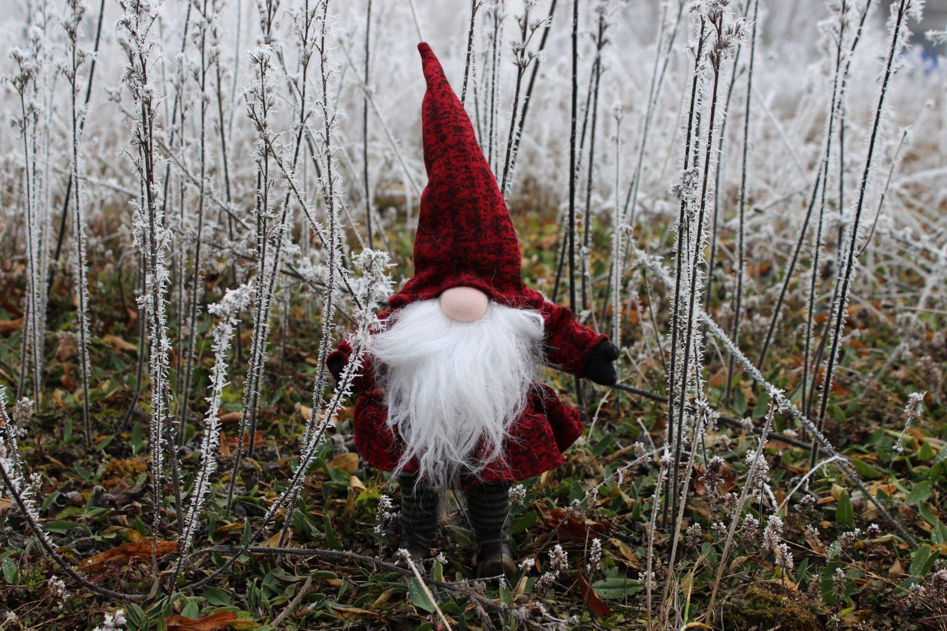 """Das rote Wunder des Winters. – """"Ein Männlein steht im Walde …"""