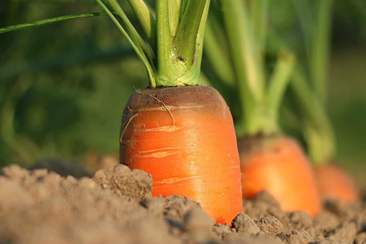 Frisches Gemüse auch ohne grünen Daumen. Tipps für die Gemüseernte und Beetpflege.