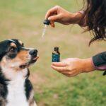 CBD für Hunde: Anwendung, Wirkung und Hintergründe.